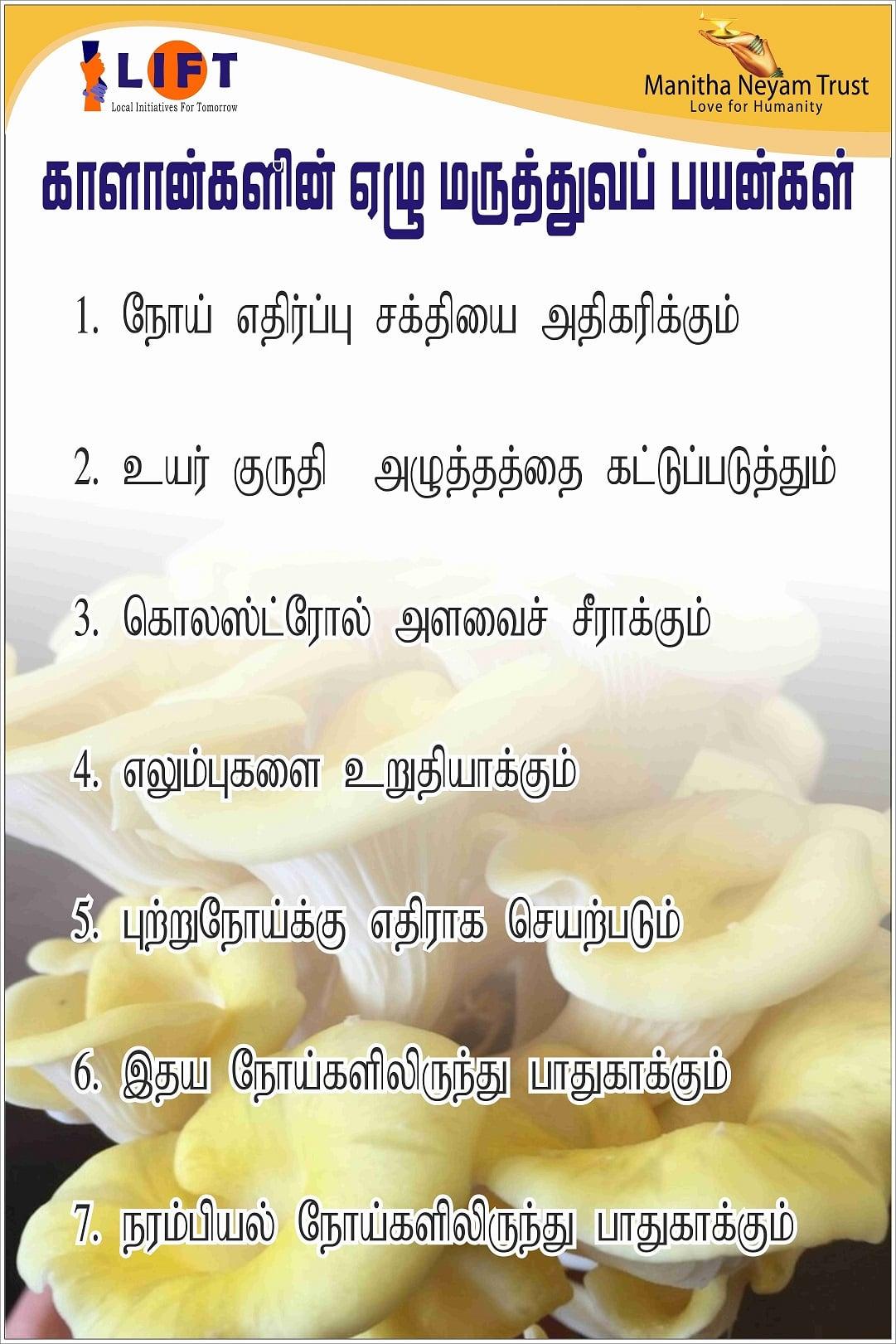 Mushroom Benefits 2