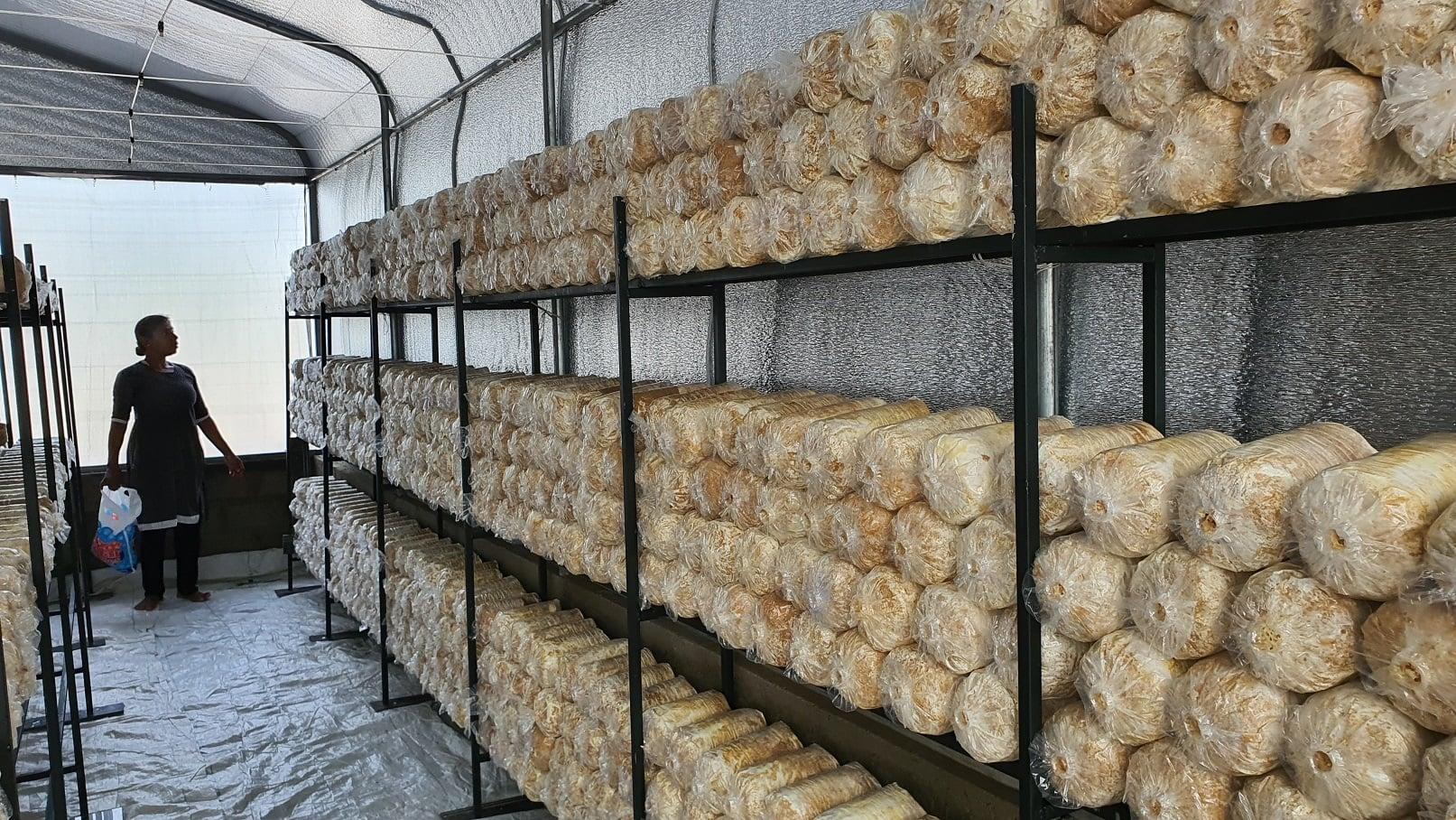 Mushroom Production – 4