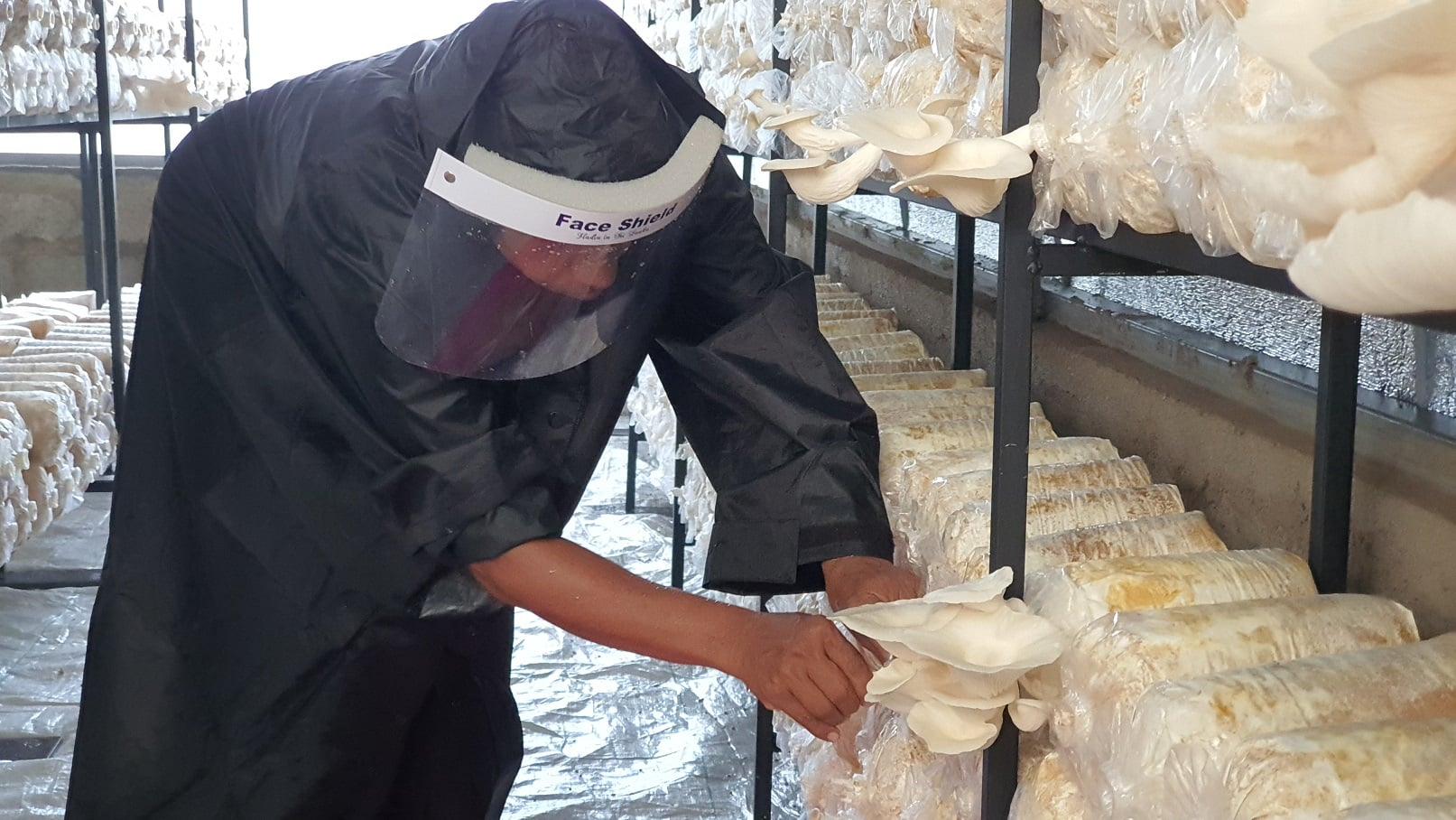 Mushroom Production – 9